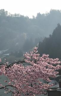Late cherry blossoms in Hijiori