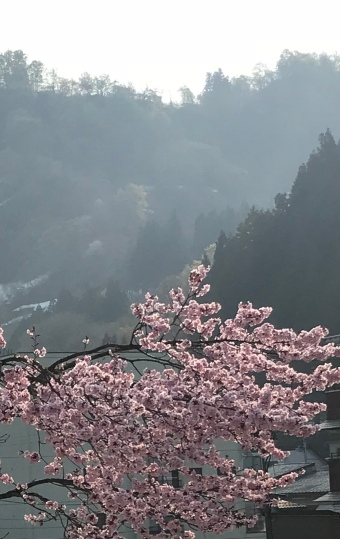 Late cherry blossoms in Hijiori